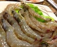 烫菜鲜虾.